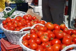 イタリア トマト