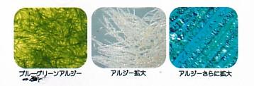 【ブルーグリーンアルジー】は藍藻類です。